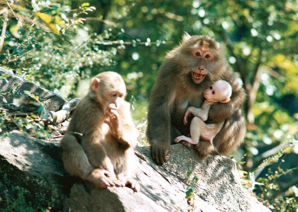 黄山生物种类,黄山动物种类