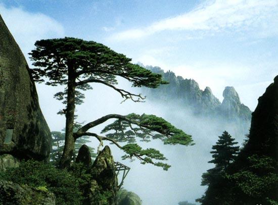 高铁专线:黄山全景经典三日游(山上住一晚)